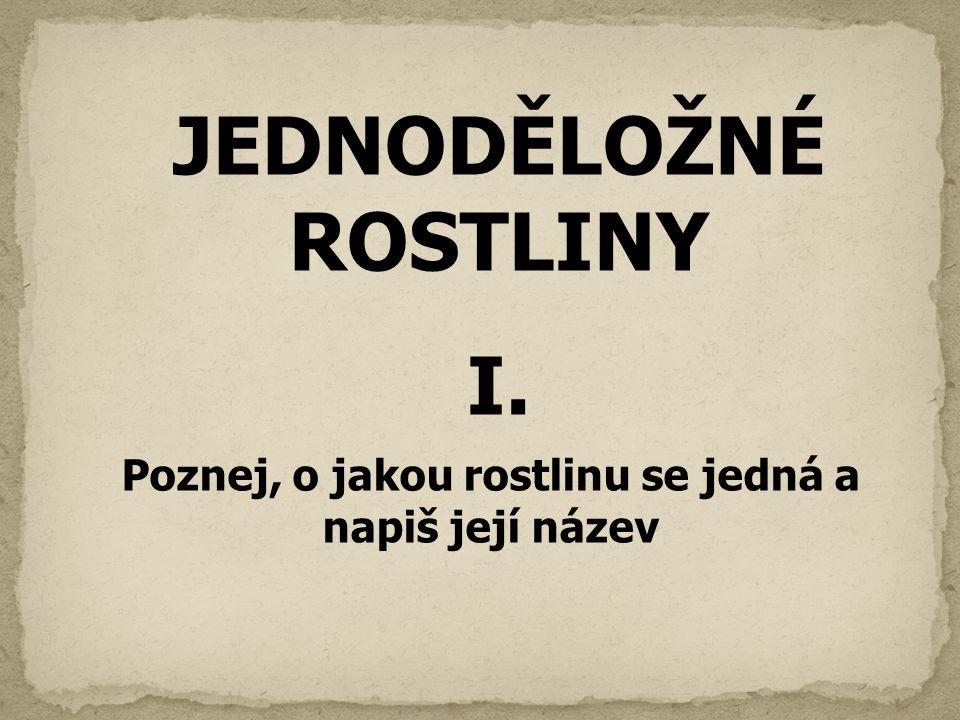 JEDNODĚLOŽNÉ ROSTLINY I. Poznej, o jakou rostlinu se jedná a napiš její název