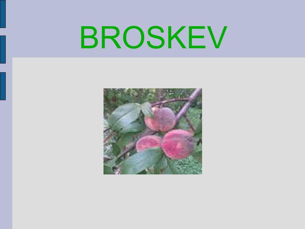 BROSKEV