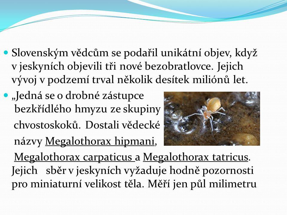 Slovenským vědcům se podařil unikátní objev, když v jeskyních objevili tři nové bezobratlovce.