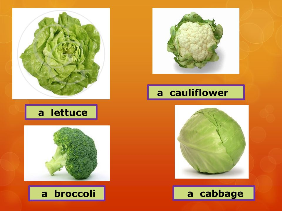 a lettuce a cauliflower a broccoli a cabbage