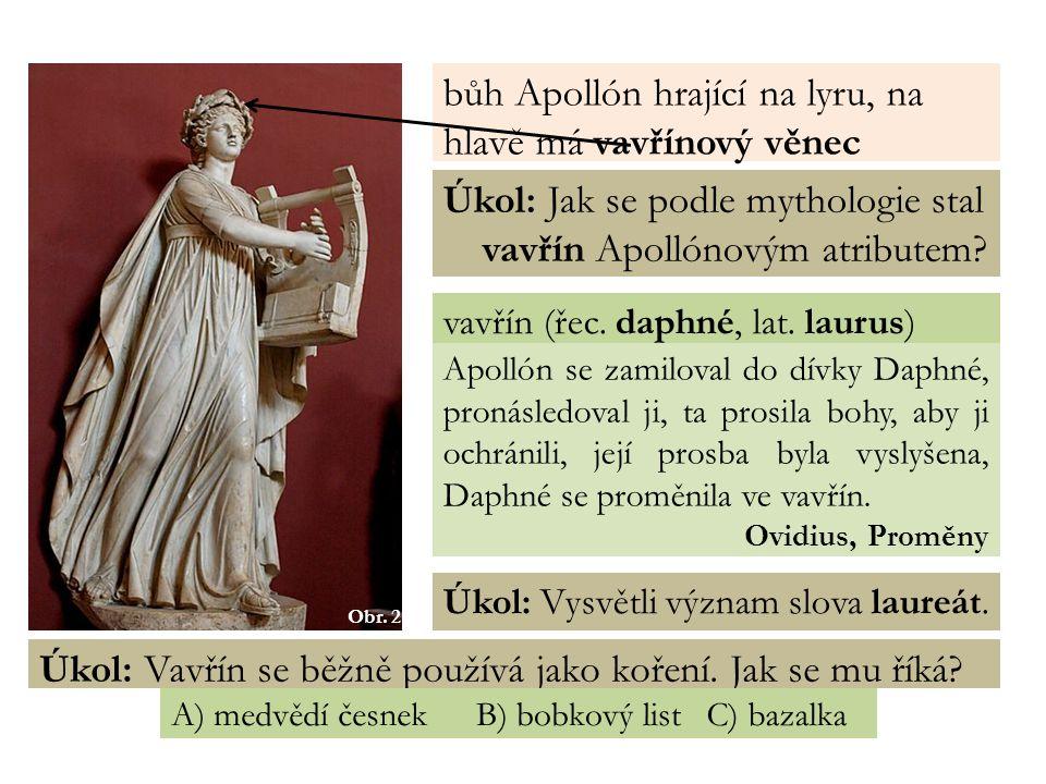 Obr. 2 bůh Apollón hrající na lyru, na hlavě má vavřínový věnec Úkol: Jak se podle mythologie stal vavřín Apollónovým atributem? vavřín (řec. daphné,