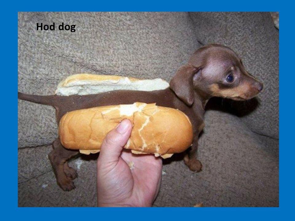 Hod dog