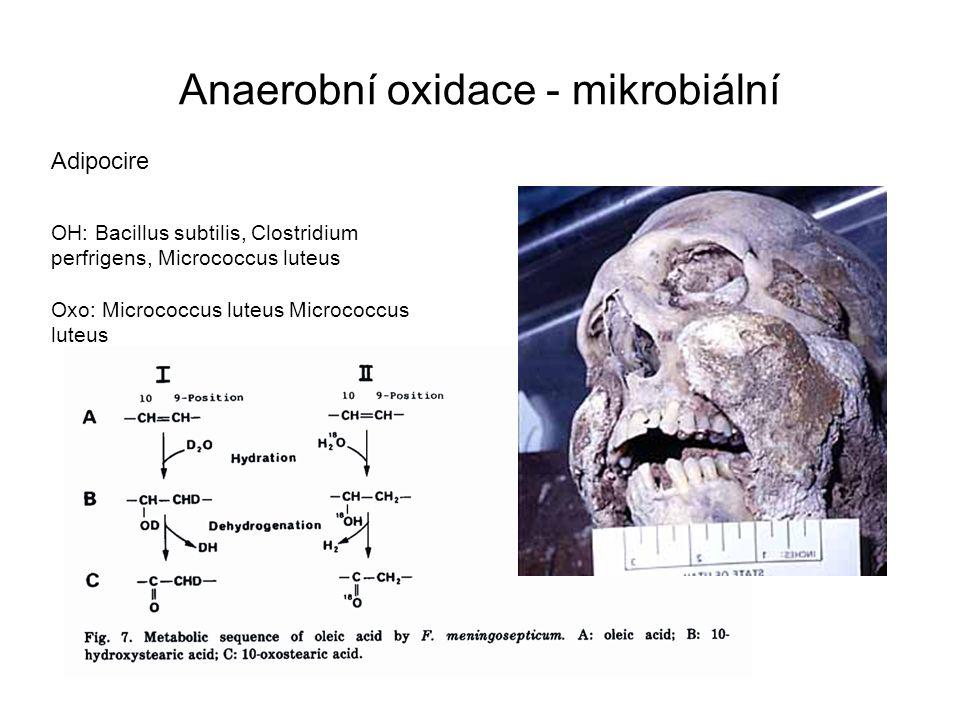 Anaerobní oxidace - mikrobiální Adipocire OH: Bacillus subtilis, Clostridium perfrigens, Micrococcus luteus Oxo: Micrococcus luteus Micrococcus luteus