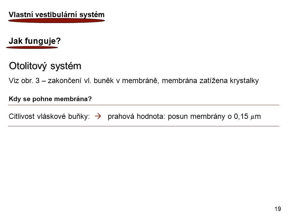 19 Vlastní vestibulární systém Jak funguje? Otolitový systém Viz obr. 3 – zakončení vl. buněk v membráně, membrána zatížena krystalky Kdy se pohne mem