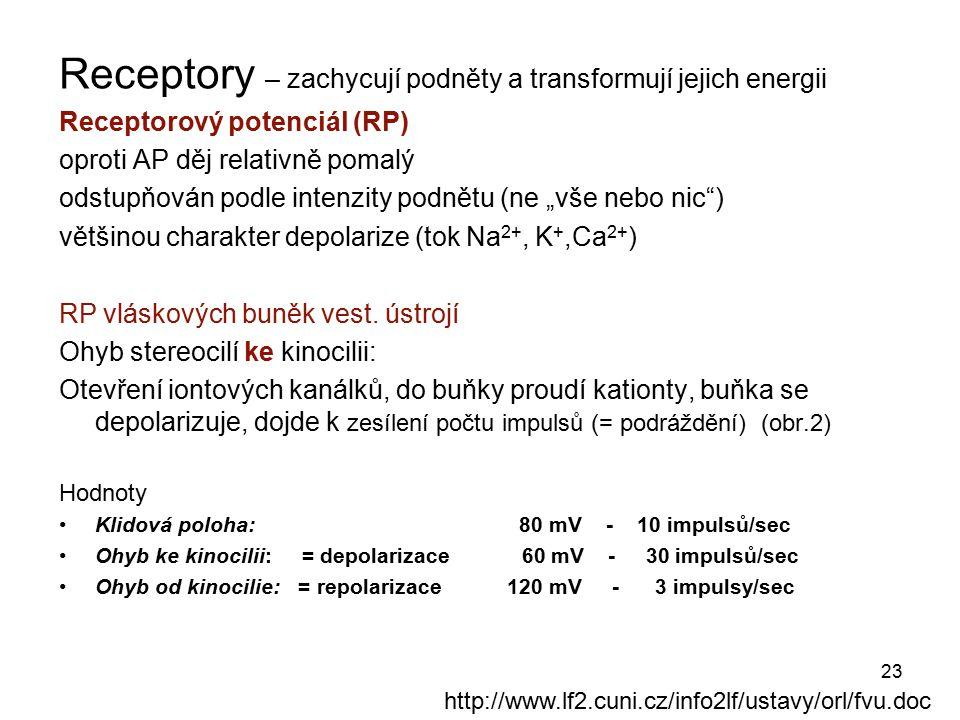 23 Receptory – zachycují podněty a transformují jejich energii Receptorový potenciál (RP) oproti AP děj relativně pomalý odstupňován podle intenzity p