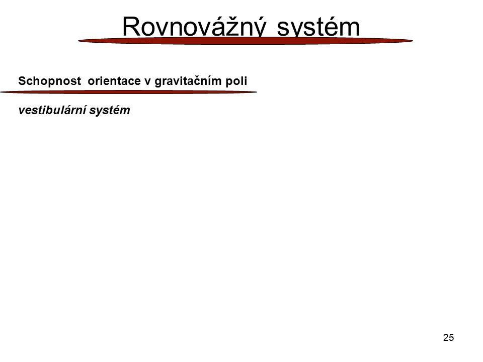 25 Rovnovážný systém Schopnost orientace v gravitačním poli vestibulární systém