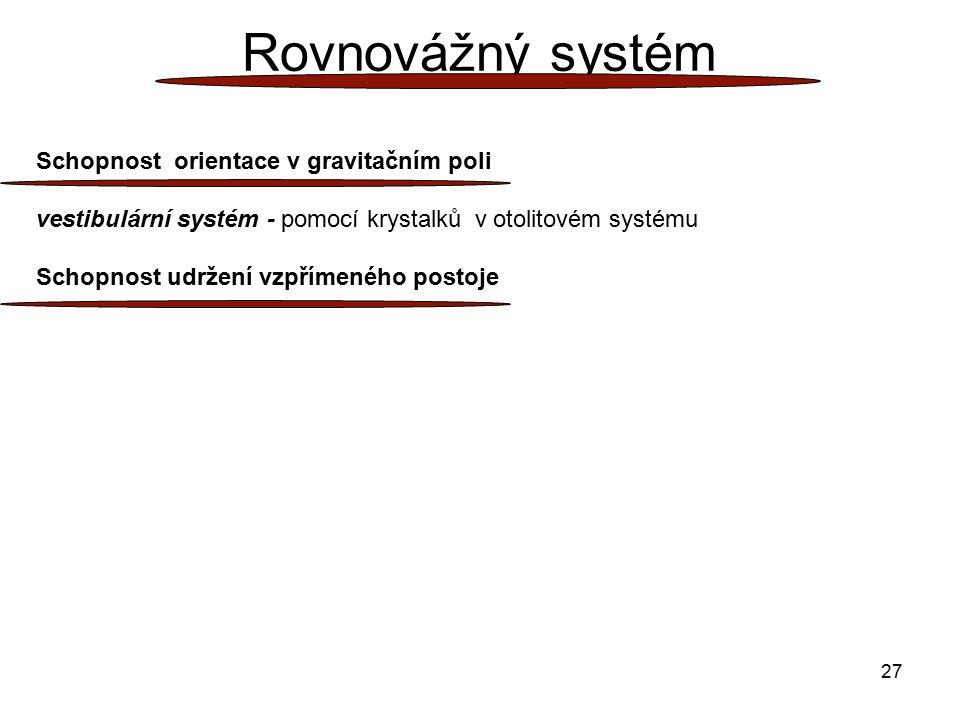27 Rovnovážný systém Schopnost orientace v gravitačním poli vestibulární systém - pomocí krystalků v otolitovém systému Schopnost udržení vzpřímeného