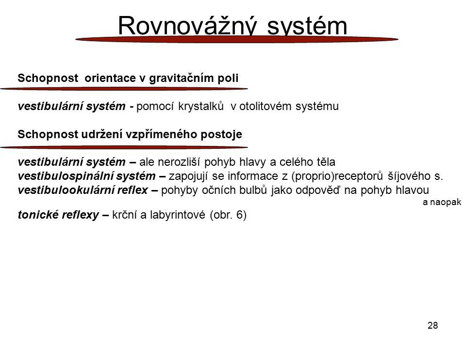 28 Rovnovážný systém Schopnost orientace v gravitačním poli vestibulární systém - pomocí krystalků v otolitovém systému Schopnost udržení vzpřímeného