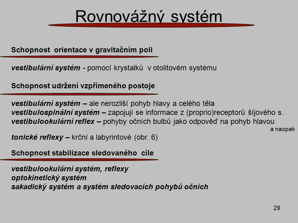 29 Rovnovážný systém Schopnost orientace v gravitačním poli vestibulární systém - pomocí krystalků v otolitovém systému Schopnost udržení vzpřímeného