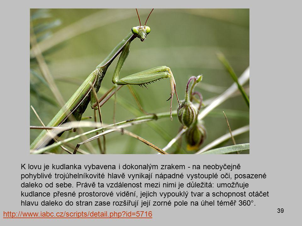 39 http://www.iabc.cz/scripts/detail.php?id=5716 K lovu je kudlanka vybavena i dokonalým zrakem - na neobyčejně pohyblivé trojúhelníkovité hlavě vynik