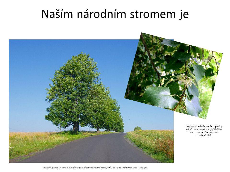 Naším národním stromem je http://upload.wikimedia.org/wikipedia/commons/thumb/e/e9/Lipa_rada.jpg/800px-Lipa_rada.jpg http://upload.wikimedia.org/wikip