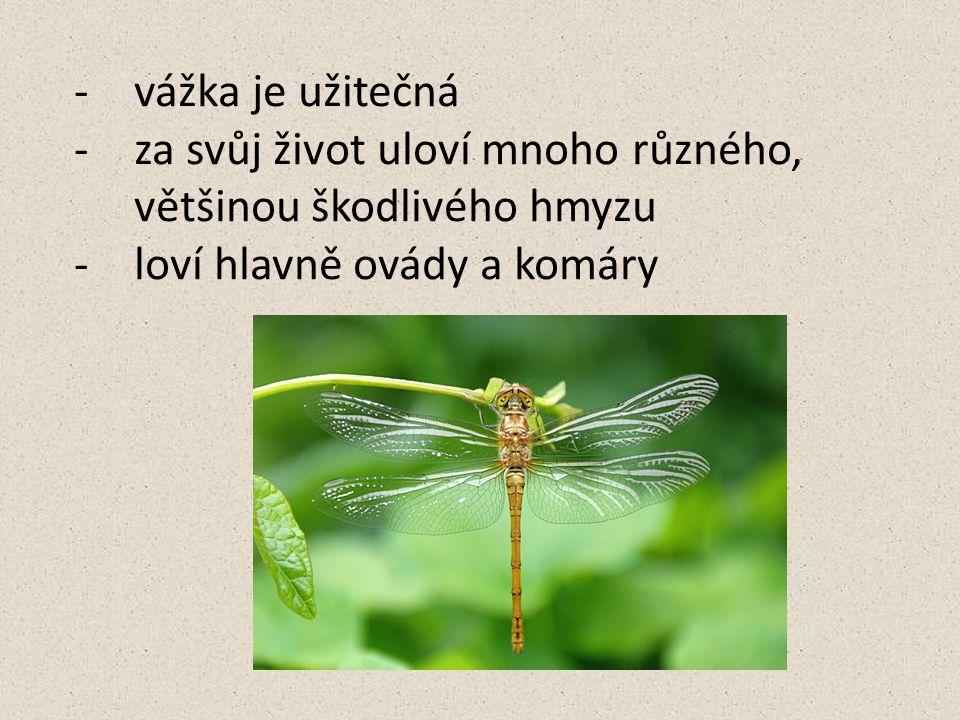 -vážka je užitečná -za svůj život uloví mnoho různého, většinou škodlivého hmyzu -loví hlavně ovády a komáry