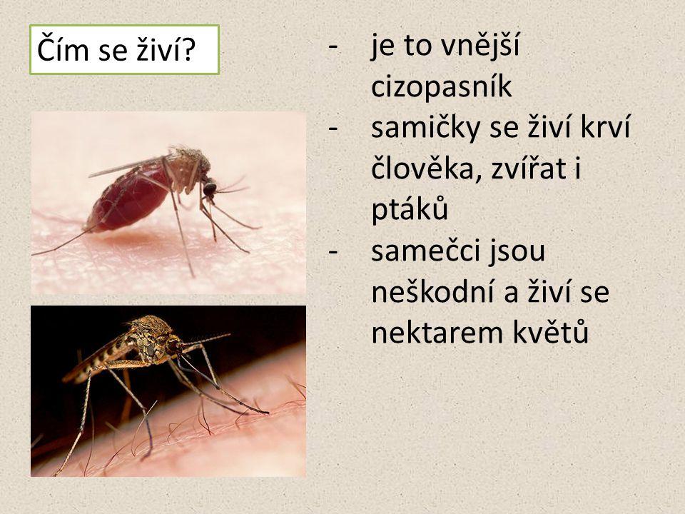 Komár pisklavý - http://psi.chovzvirat.com/img/clanky//originals/18-1851.jpghttp://psi.chovzvirat.com/img/clanky//originals/18-1851.jpg Komár pisklavý sající - http://img.ahaonline.cz/img/18/article/769472_import-komar- pisklavy-je-u-nas-nejrozsirenejsi.jpghttp://img.ahaonline.cz/img/18/article/769472_import-komar- pisklavy-je-u-nas-nejrozsirenejsi.jpg Komár pisklavý - http://www.ireceptar.cz/res/data/073/008971.jpghttp://www.ireceptar.cz/res/data/073/008971.jpg Vývojová stádia komára - http://stary_moskyt.moskyt.net/image/200312261122_vyvoj.jpghttp://stary_moskyt.moskyt.net/image/200312261122_vyvoj.jpg Kukla komára – http://nd01.jxs.cz/615/550/7a90381a40_27557135_o2.jpghttp://nd01.jxs.cz/615/550/7a90381a40_27557135_o2.jpg Komáří vajíčka - http://nd01.jxs.cz/714/854/8993497c2a_27545344_o2.jpghttp://nd01.jxs.cz/714/854/8993497c2a_27545344_o2.jpg Dospělý jedinec - http://nd01.jxs.cz/559/789/6995522f2e_27545452_o2.jpghttp://nd01.jxs.cz/559/789/6995522f2e_27545452_o2.jpg Larva komára - http://nd01.jxs.cz/014/665/071e1a8d09_27545387_o2.jpghttp://nd01.jxs.cz/014/665/071e1a8d09_27545387_o2.jpg Video komár pisklavý - http://www.youtube.com/watch?feature=player_detailpage&v=C8CKEBwPlY8 http://www.youtube.com/watch?feature=player_detailpage&v=C8CKEBwPlY8 Ovád hovězí - http://www.gymta.cz/kabinety/kab_biologie/videoatlas/hmyz/do/141-ovad- hovezi.jpghttp://www.gymta.cz/kabinety/kab_biologie/videoatlas/hmyz/do/141-ovad- hovezi.jpg Vážka obecná – http://nd05.jxs.cz/054/242/6a96629d9d_80457131_o2.jpghttp://nd05.jxs.cz/054/242/6a96629d9d_80457131_o2.jpg Vážka obecná - http://img7.rajce.idnes.cz/d0702/5/5214/5214660_cca1026dbb02bfe74a53c0cc550567 2f/images/DSC_8367.jpg http://img7.rajce.idnes.cz/d0702/5/5214/5214660_cca1026dbb02bfe74a53c0cc550567 2f/images/DSC_8367.jpg Zdroje: