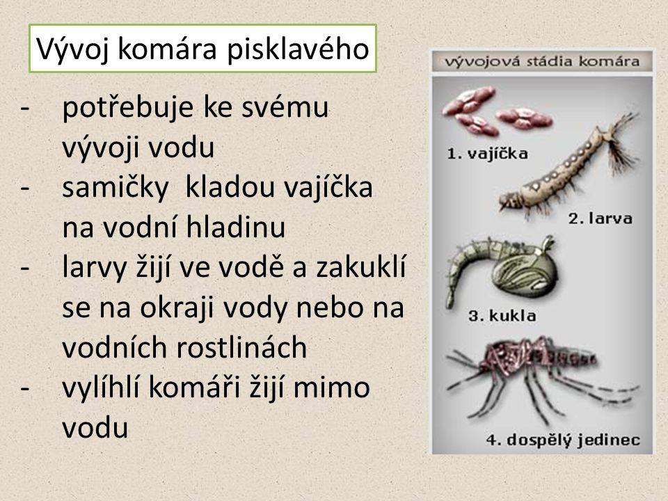Vývoj komára pisklavého -potřebuje ke svému vývoji vodu -samičky kladou vajíčka na vodní hladinu -larvy žijí ve vodě a zakuklí se na okraji vody nebo na vodních rostlinách -vylíhlí komáři žijí mimo vodu