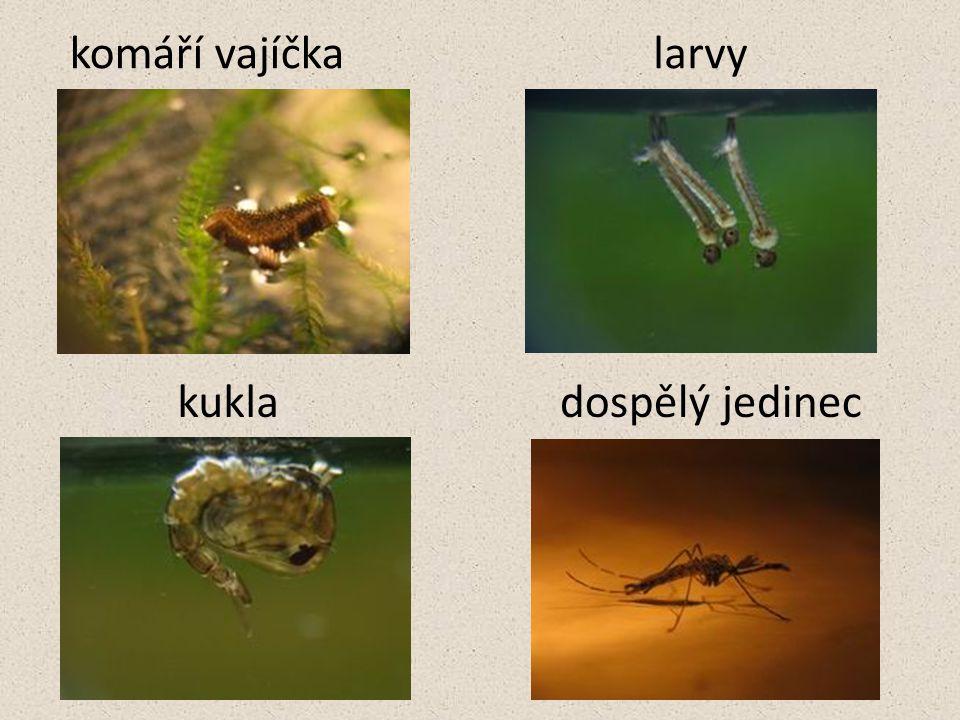 -na zimu samičky komárů zalézají do skulin stromů, ale i do sklepů domů -komáry loví rorýsi, sýkorky, vlaštovky a netopýři -larvami se živí žabí pulci, rybí potěr a dravé larvy vážek a potápníků