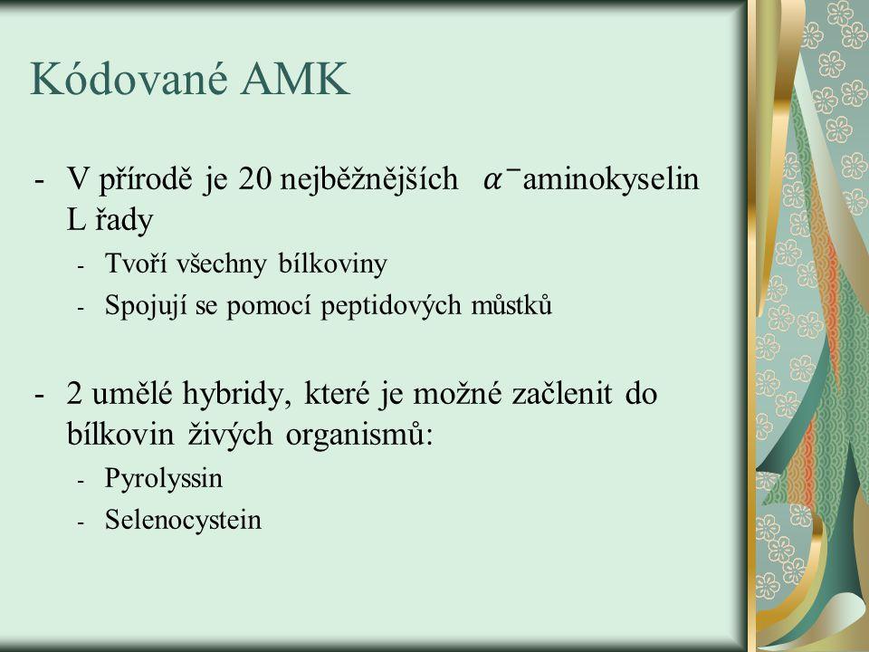 Kódované AMK -V přírodě je 20 nejběžnějších aminokyselin L řady - Tvoří všechny bílkoviny - Spojují se pomocí peptidových můstků -2 umělé hybridy, které je možné začlenit do bílkovin živých organismů: - Pyrolyssin - Selenocystein