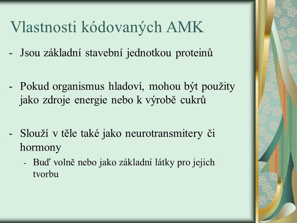Vlastnosti kódovaných AMK -Jsou základní stavební jednotkou proteinů -Pokud organismus hladoví, mohou být použity jako zdroje energie nebo k výrobě cu