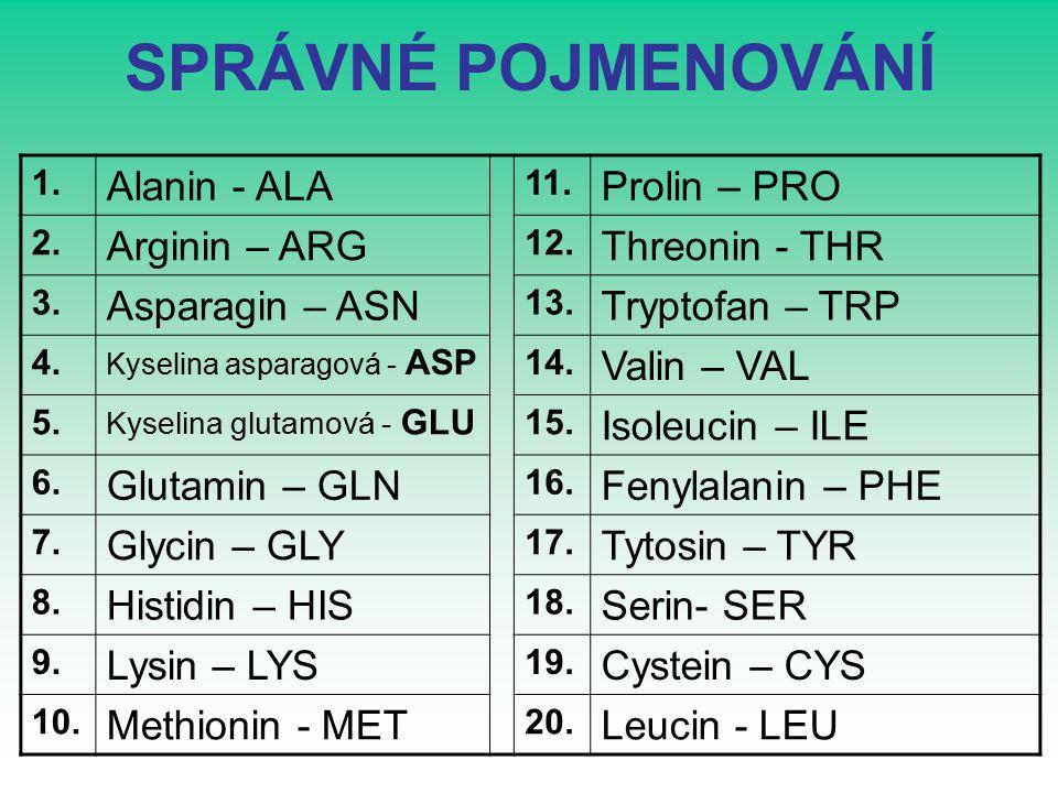 SPRÁVNÉ POJMENOVÁNÍ 1. Alanin - ALA 11. Prolin – PRO 2.