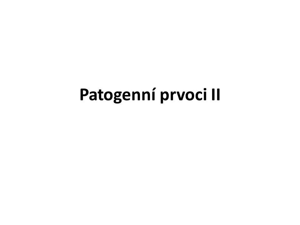 Patogenní prvoci II