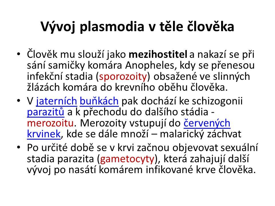 Vývoj plasmodia v těle člověka Člověk mu slouží jako mezihostitel a nakazí se při sání samičky komára Anopheles, kdy se přenesou infekční stadia (spor