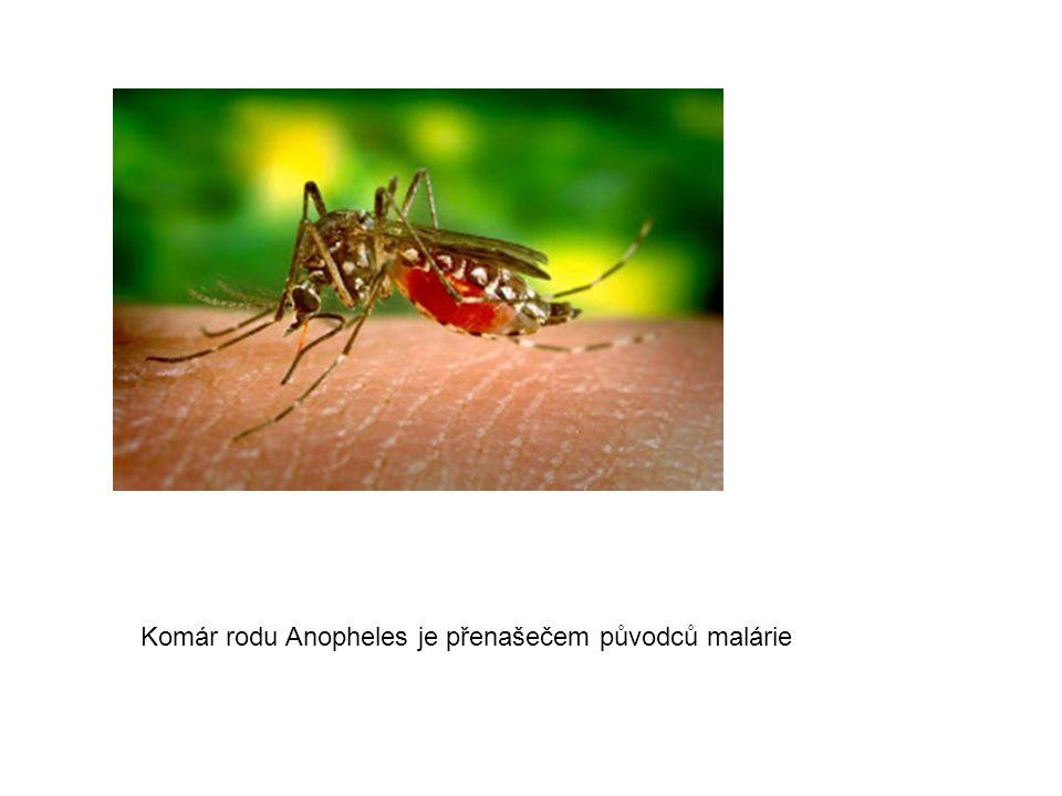Komár rodu Anopheles je přenašečem původců malárie