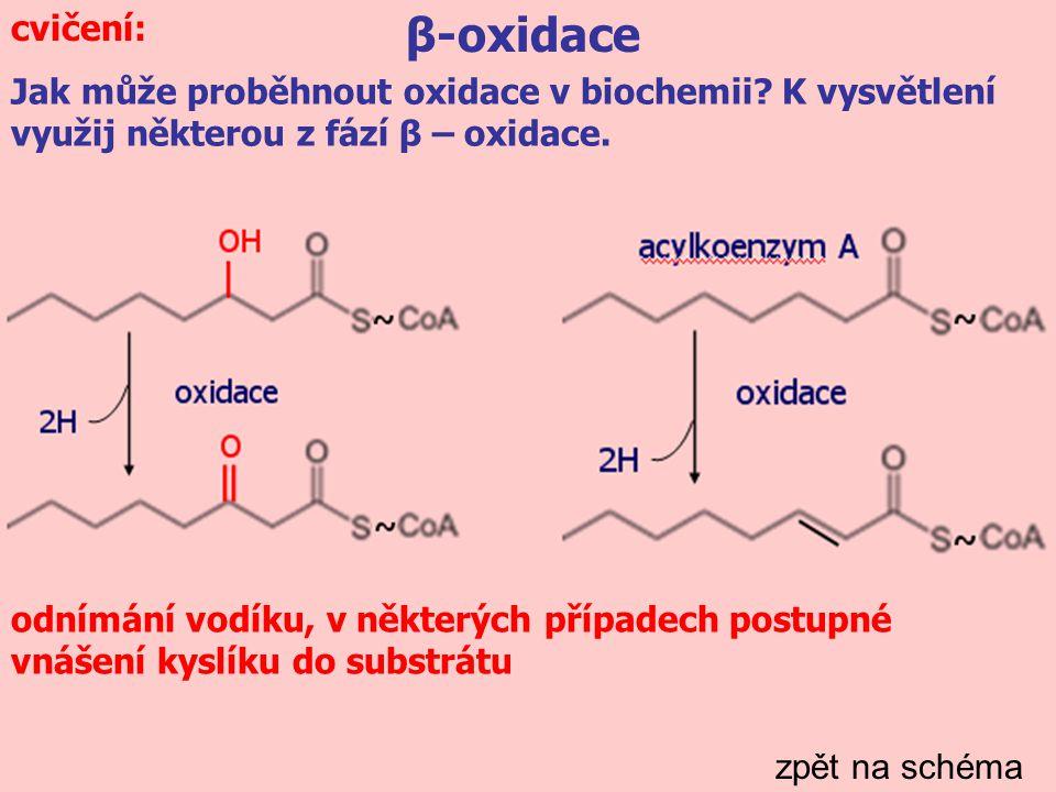 β-oxidace zpět na schéma Jak může proběhnout oxidace v biochemii.