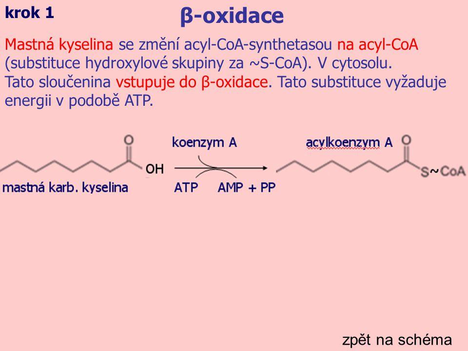 zpět na schéma β-oxidace krok 2 L-karnitin přenese aktivovanou mastnou kyselinu z cytosolu do mitochondrií, kde je oxidována (tzv.