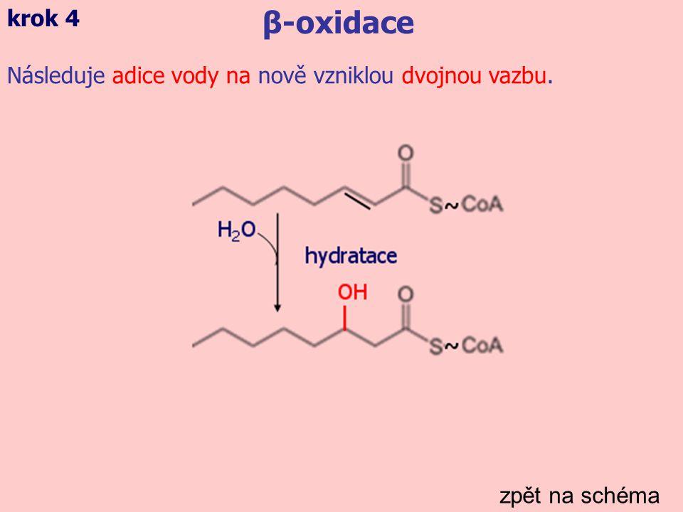 zpět na schéma β-oxidace krok 5 Dehydrogenace nově navázané hydroxylové skupiny (redukce molekuly NAD + na NADH).