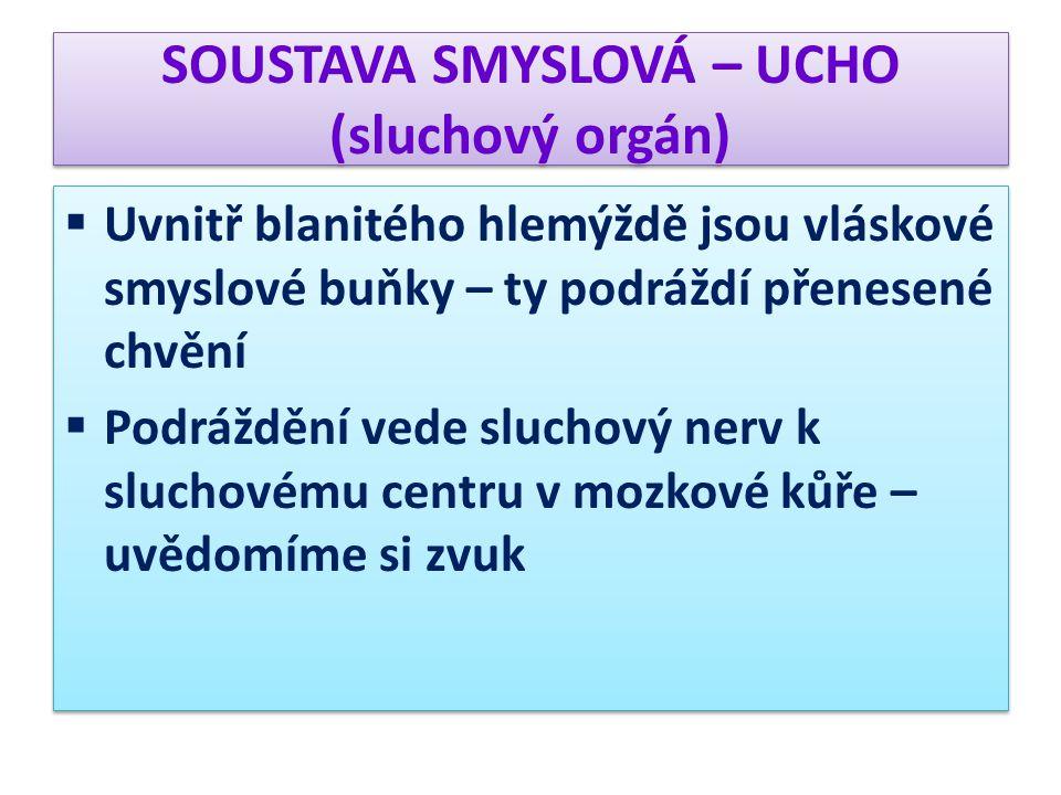 SOUSTAVA SMYSLOVÁ – UCHO (sluchový orgán)  Uvnitř blanitého hlemýždě jsou vláskové smyslové buňky – ty podráždí přenesené chvění  Podráždění vede sl