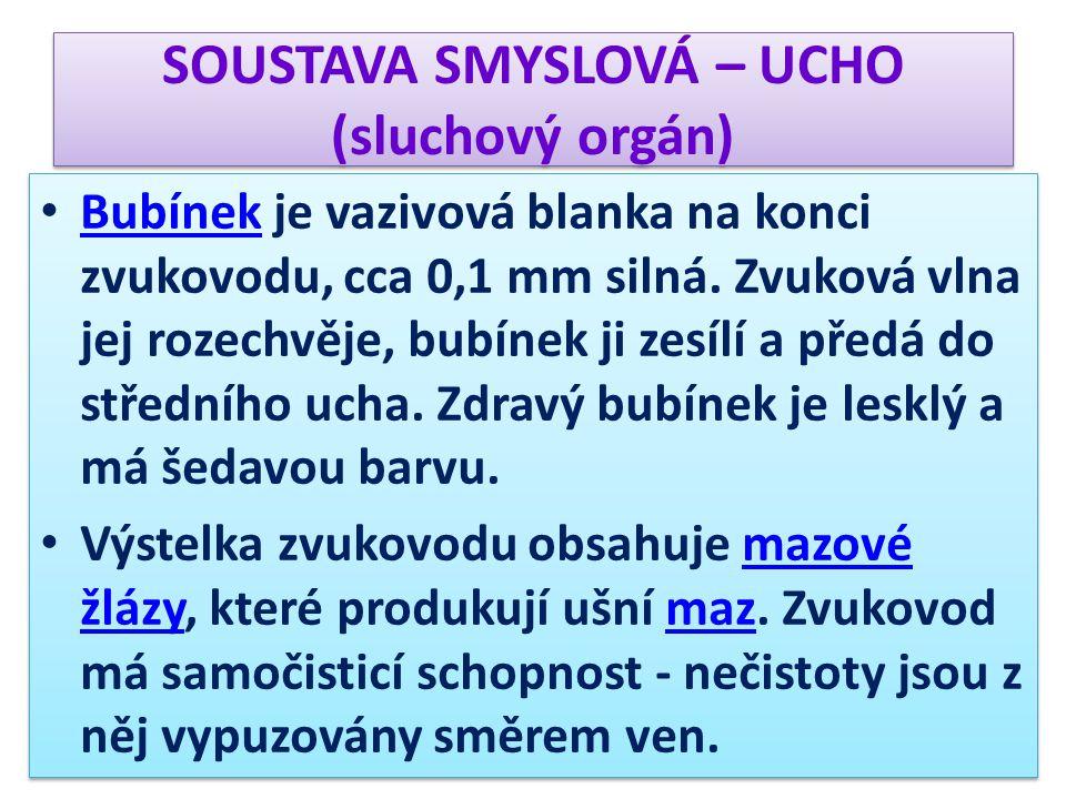 SOUSTAVA SMYSLOVÁ – UCHO (sluchový orgán) Bubínek je vazivová blanka na konci zvukovodu, cca 0,1 mm silná.