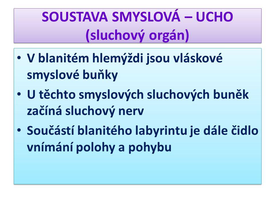 SOUSTAVA SMYSLOVÁ – UCHO (sluchový orgán) b ) Činnost sluchového orgánu Ušní boltec zachycuje zvukové vlny, které procházejí zvukovodem k bubínku Bubínek se rozkmitá, chvění se přenese na sluchové kůstky Kladívko rozechvěje kovadlinku, kovadlinka třmínek.