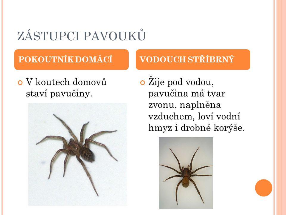 ZÁSTUPCI PAVOUKŮ V koutech domovů staví pavučiny. Žije pod vodou, pavučina má tvar zvonu, naplněna vzduchem, loví vodní hmyz i drobné korýše. POKOUTNÍ
