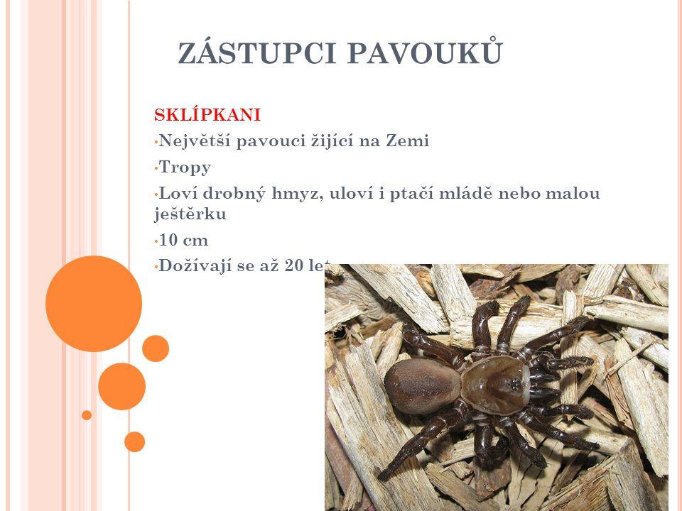 ZÁSTUPCI PAVOUKŮ SKLÍPKANI Největší pavouci žijící na Zemi Tropy Loví drobný hmyz, uloví i ptačí mládě nebo malou ještěrku 10 cm Dožívají se až 20 let