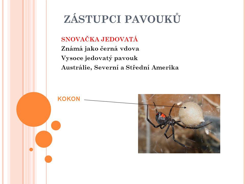 ZÁSTUPCI PAVOUKŮ SNOVAČKA JEDOVATÁ Známá jako černá vdova Vysoce jedovatý pavouk Austrálie, Severní a Střední Amerika KOKON