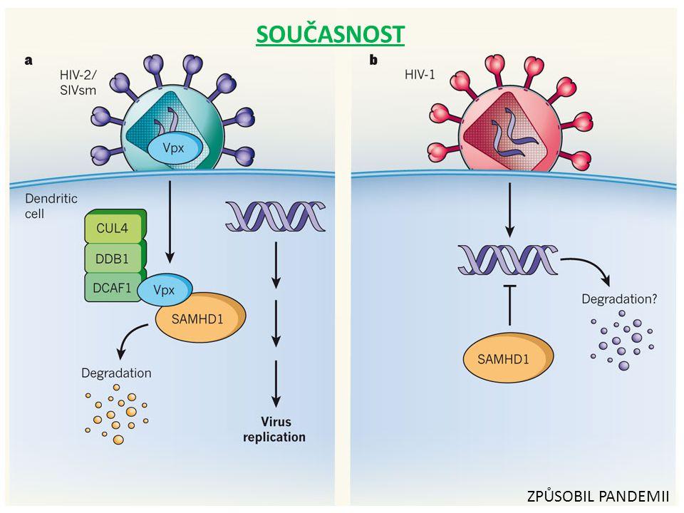 bílá krvinka Virus HIV