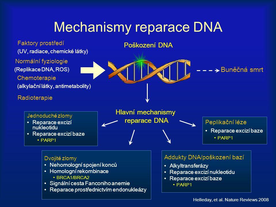 Mechanismy reparace DNA Peplikační léze Reparace excizí baze PARP1 Jednoduché zlomy Reparace excizí nukleotidu Reparace excizí baze PARP1 Dvojité zlom