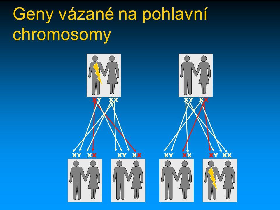Geny vázané na pohlavní chromosomy XYXYXXXYX X X XXYXYXX