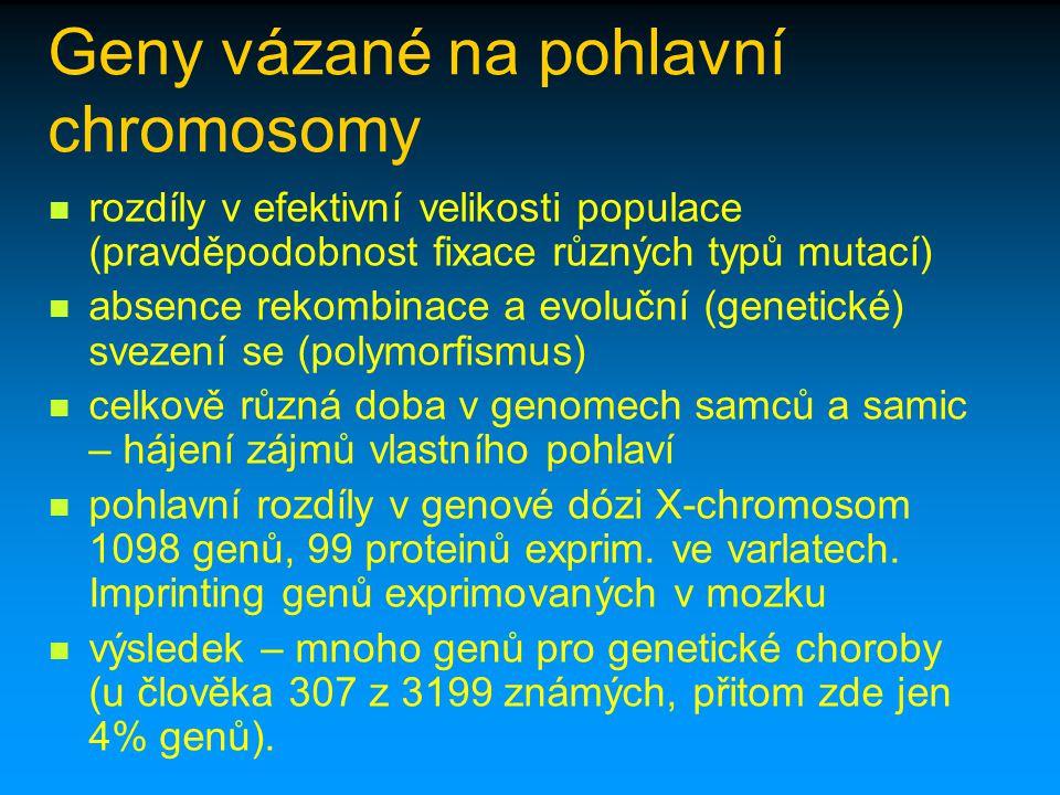 Geny vázané na pohlavní chromosomy rozdíly v efektivní velikosti populace (pravděpodobnost fixace různých typů mutací) absence rekombinace a evoluční