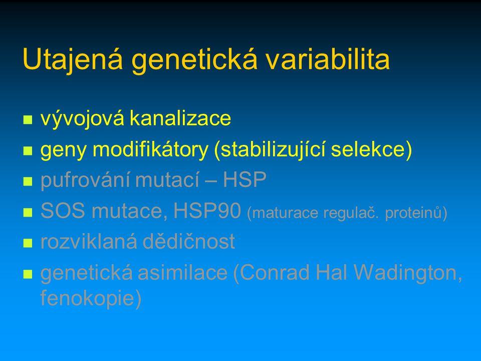 Utajená genetická variabilita vývojová kanalizace geny modifikátory (stabilizující selekce) pufrování mutací – HSP SOS mutace, HSP90 (maturace regulač