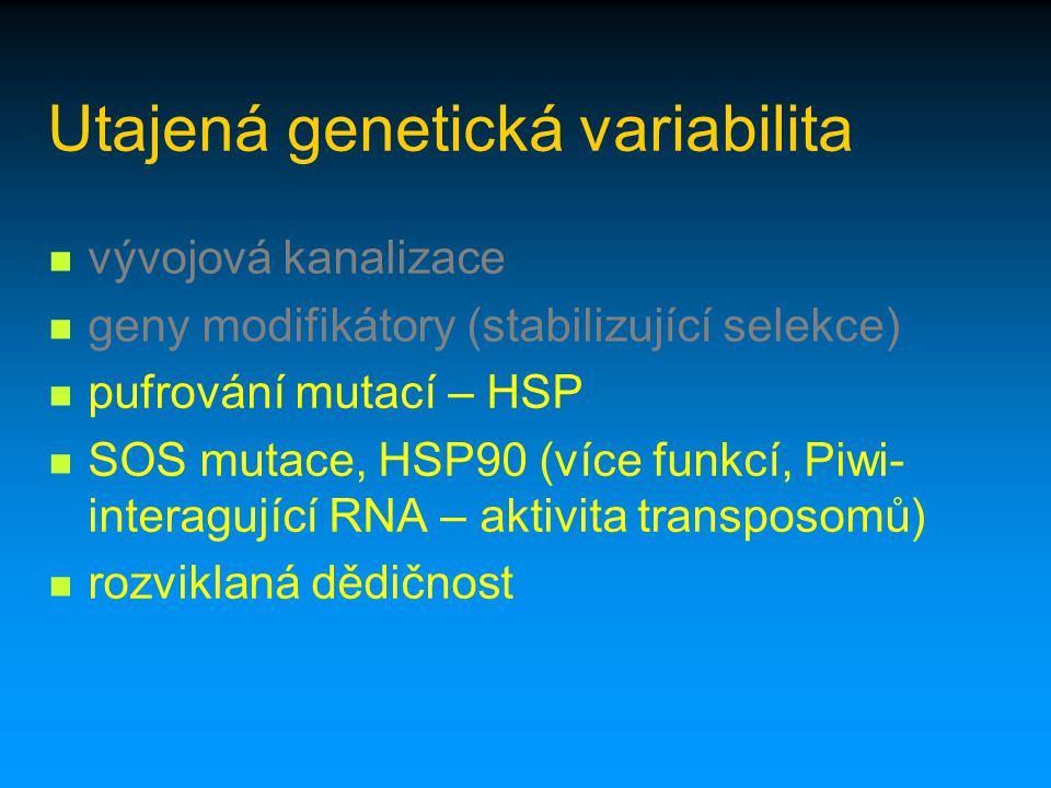 Utajená genetická variabilita vývojová kanalizace geny modifikátory (stabilizující selekce) pufrování mutací – HSP SOS mutace, HSP90 (více funkcí, Piw