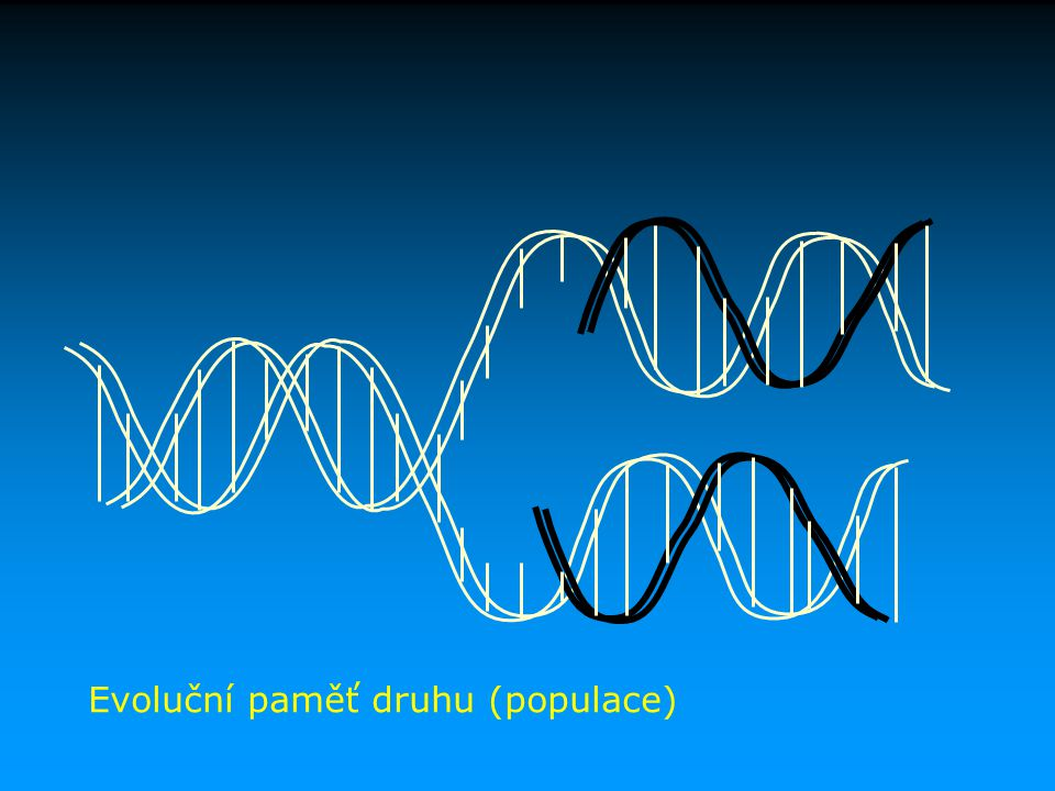 Cytoplasmatická dědičnost Genomy organel (mitochondrií a plastidů) vnitrobuněčné konflikty (absence meiozy) odpovědnost za řadu genetických poruch Dědičnost buněčných struktur (membrány, jejich receptorová výbava, cytoskelet, enzymatická výbava, regulační sítě genové exprese) = epigenetická dědičnost