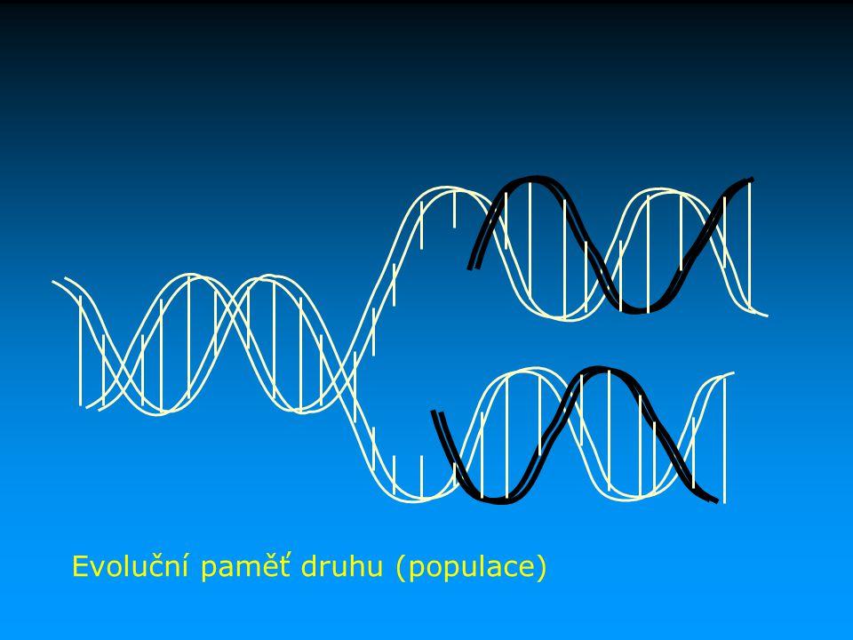 Mutace crossveinless u D. melanogaster