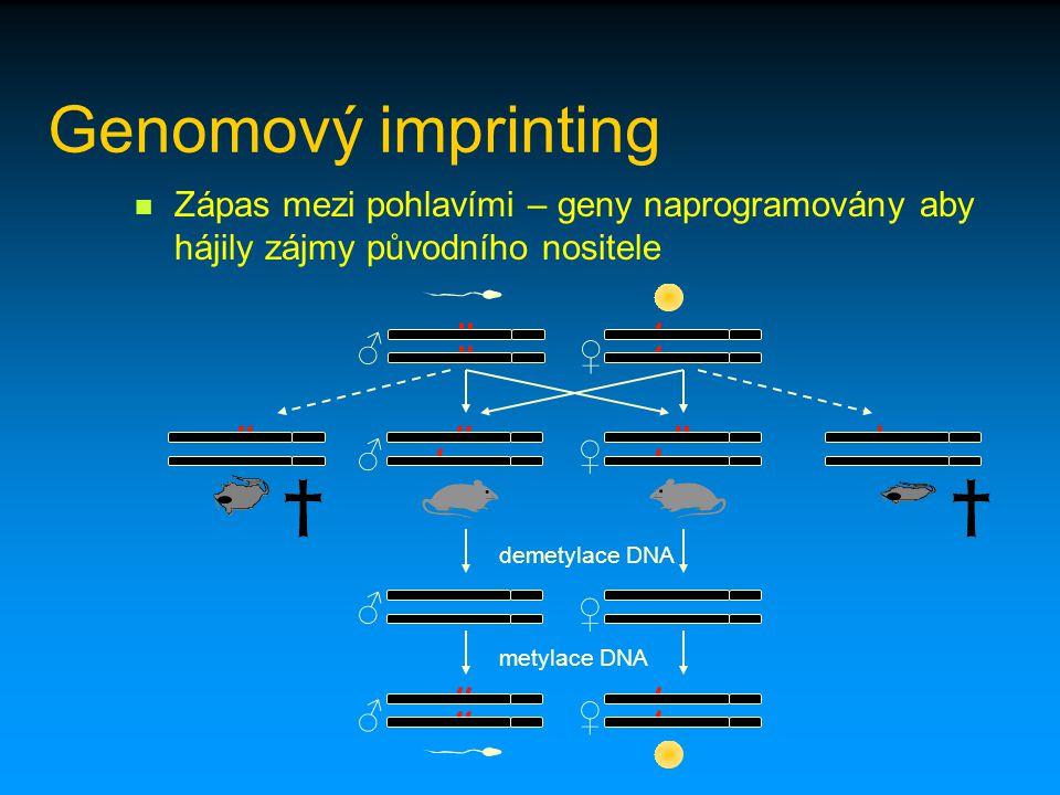 Genomový imprinting Zápas mezi pohlavími – geny naprogramovány aby hájily zájmy původního nositele ♂ ♀ ♂♀ ♀ ♀ ♂ ♂ demetylace DNA metylace DNA