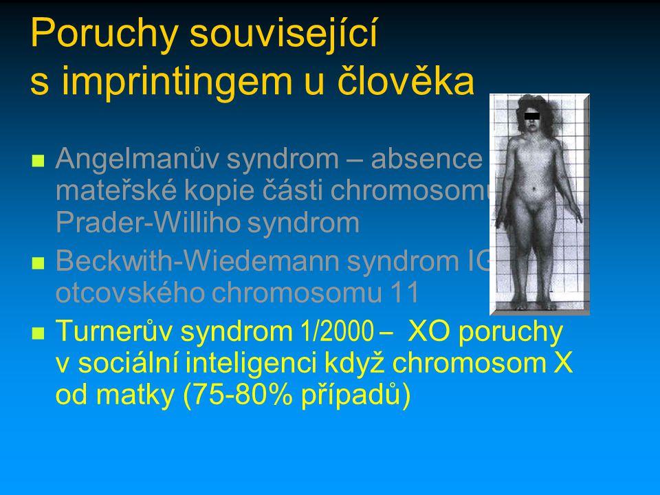 Poruchy související s imprintingem u člověka Angelmanův syndrom – absence mateřské kopie části chromosomu 15 x Prader-Williho syndrom Beckwith-Wiedema