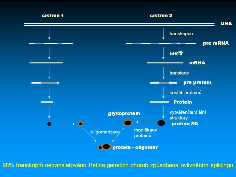 DNA pre mRNA mRNA pre protein Protein glykoprotein protein 3D protein - oligomer transkripce sestřih translace sestřih proteinů vytváření terciální st