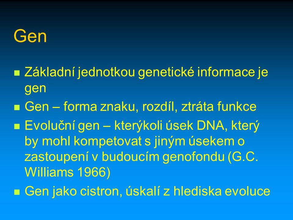 Gen Základní jednotkou genetické informace je gen Gen – forma znaku, rozdíl, ztráta funkce Evoluční gen – kterýkoli úsek DNA, který by mohl kompetovat
