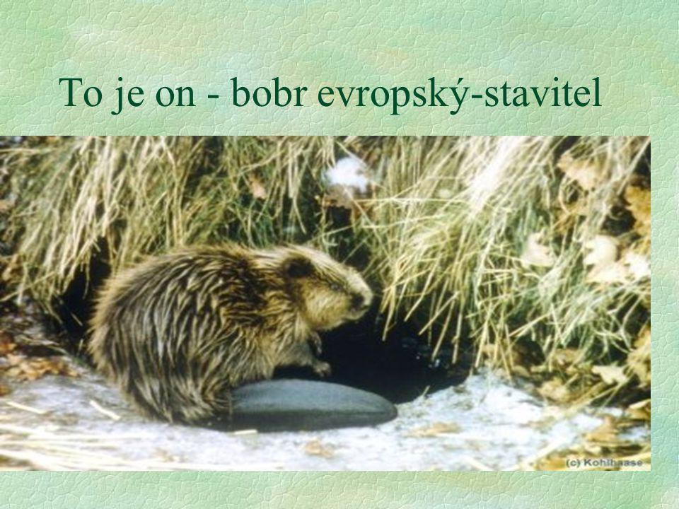 Lokalita Mělčany §Natura :z hlediska zachování přírodně cenné ichtyofauny není vhodné budování nádrže s trvalým objemem vody a zaplavením vodního toku potoka Dědiny a přilehlé luční nivy