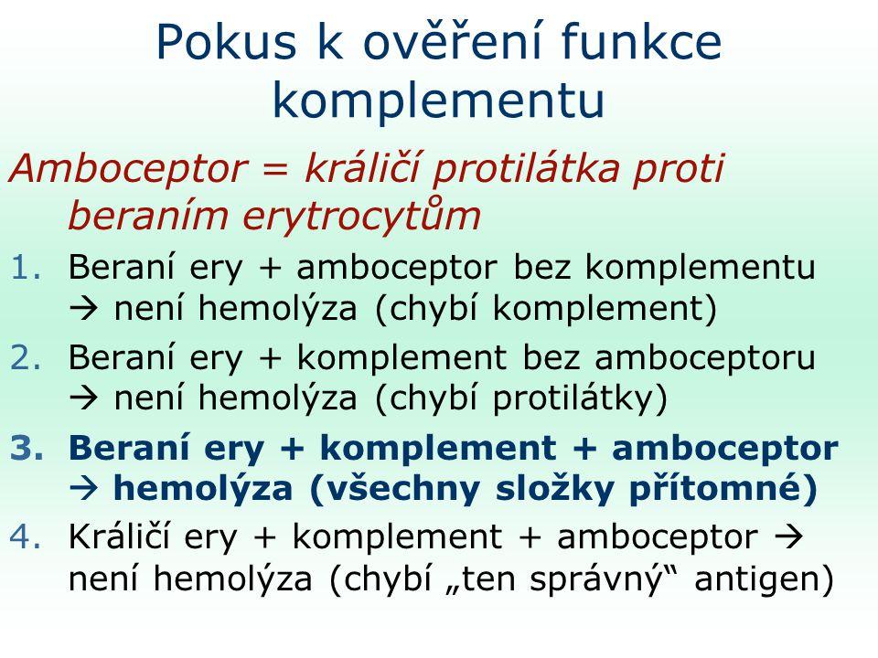 """Pokus k ověření funkce komplementu Amboceptor = králičí protilátka proti beraním erytrocytům 1.Beraní ery + amboceptor bez komplementu  není hemolýza (chybí komplement) 2.Beraní ery + komplement bez amboceptoru  není hemolýza (chybí protilátky) 3.Beraní ery + komplement + amboceptor  hemolýza (všechny složky přítomné) 4.Králičí ery + komplement + amboceptor  není hemolýza (chybí """"ten správný antigen)"""