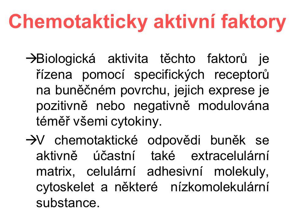 Chemotakticky aktivní faktory  Biologická aktivita těchto faktorů je řízena pomocí specifických receptorů na buněčném povrchu, jejich exprese je pozitivně nebo negativně modulována téměř všemi cytokiny.