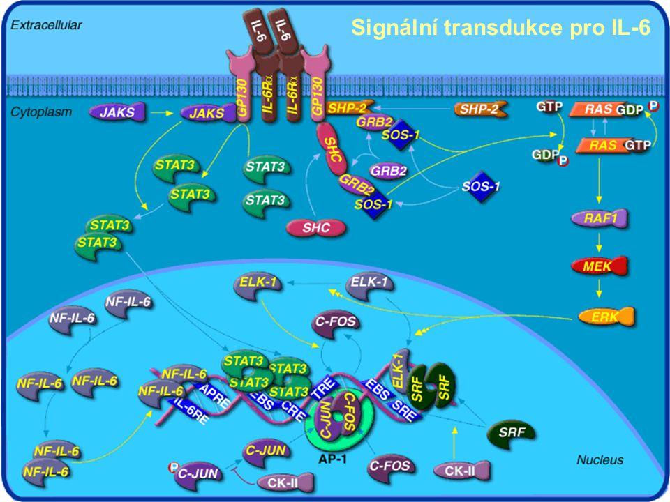 Signální transdukce pro IL-6